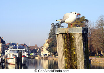 Seagull and Annecy city, France - Seagull and Annecy city on...