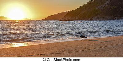 Seagull and beautiful sunrise at Red Beach near Sugarloaf Mountain, Rio de Janeiro
