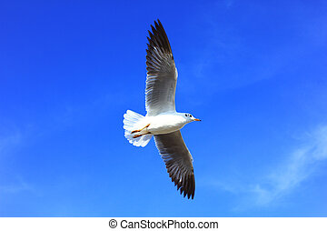 seagull and blue sky.