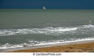 seagull and sea. slowmotion