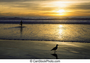 seagull and surfer