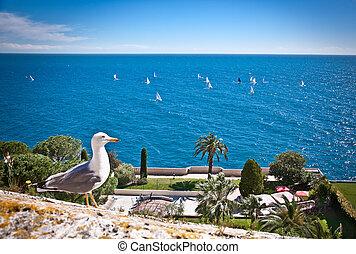 Seagull ang Azur blue sea. Azur coast.