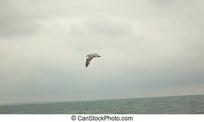 Seagull at dusk or dawn flying away.