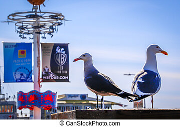 seagull at pier