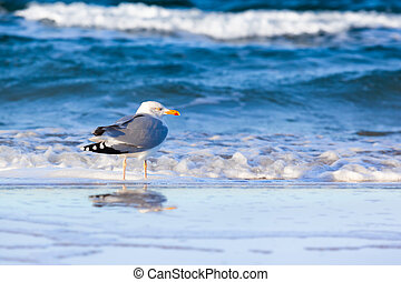 Seagull at the Shore
