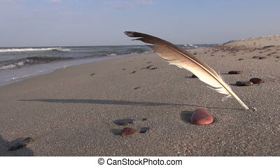 seagull bird feather on sea beach sand in wind