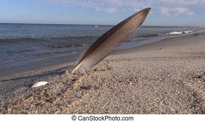 seagull bird feather on sea beach sand. summer sea landscape