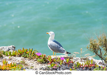 Seagull bird on ALgarve coast, Portugal