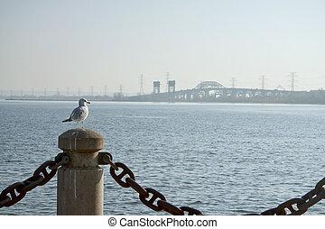 Seagull By Lake Ontario