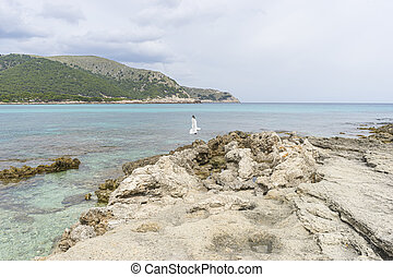 Seagull by the mediterranean sea on the island of Mallorca, Spain. Turquoise sea water