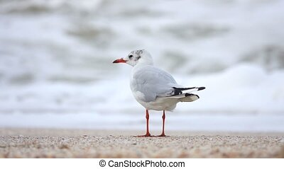 seagull by the sea