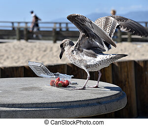 Seagull eating strawberries on the beach