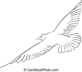seagull - Black drawing of seagull isolated on the white.