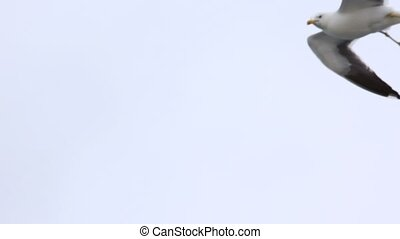 Seagull flies in sky against cloudy sky in afternoon