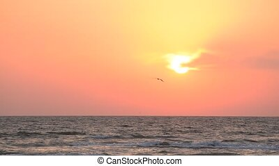 Seagull flies on background of rising sun over sea