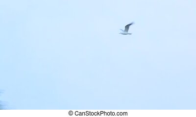 Seagull flies on background of sky