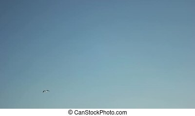 Seagull flies on the blue sky background