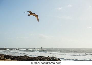Seagull flies over rocks on the coast of the Atlantic ocean. Porto, Portugal.
