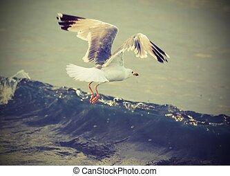 seagull flies over the water of ocean