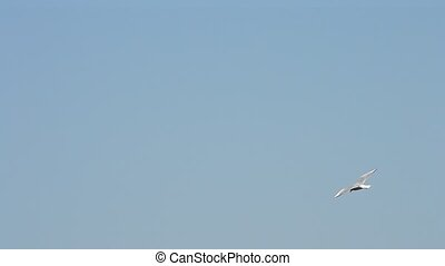 Seagull flies over water in summer on background of blue sky