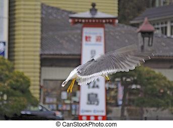 Seagull flight in an Asian town