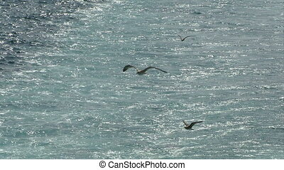 seagull fly 10