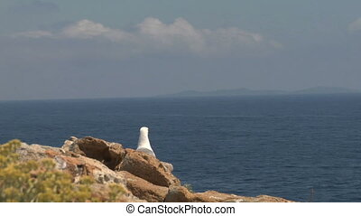 seagull fly 16