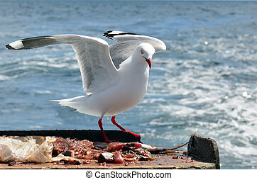 Seagull fly above the sea