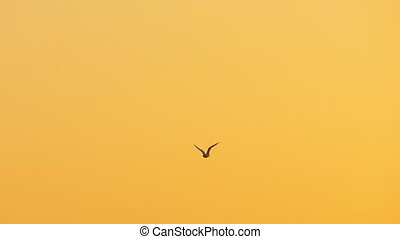 Seagull flying against the sky at sunset - Slow motion shot...