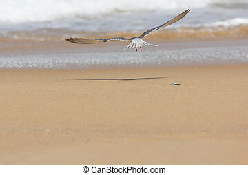 seagull flying from death fish on the beach sand