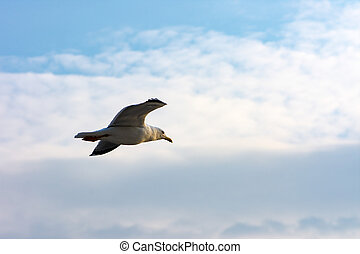 seagull flying high in the sky