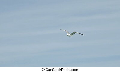 Seagull Flying High In The Sky slow motion