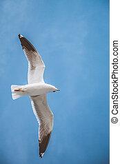 Seagull flying in blue sky