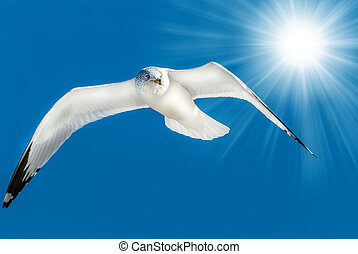 Seagull flying in blue sky with sun rays
