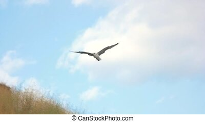 Seagull flying in slow-mo. Bird on sky background. Born for...
