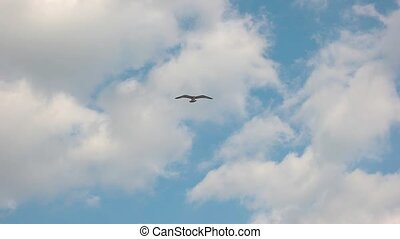 Seagull flying in slow motion. Bird in the sky. Through the...