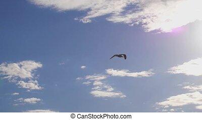 Seagull flying in the sea. Beautiful sun over the sea, sun...
