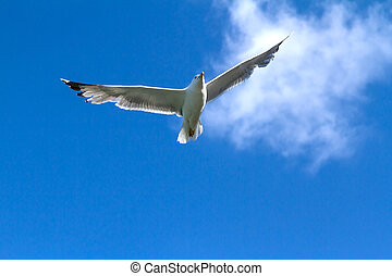 seagull flying in the sky among the clouds