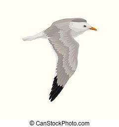 Seagull flying in the sky, gray and white sea bird vector...