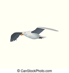 Seagull flying in the sky, gray and white sea bird with wings spread vector Illustration on a white background