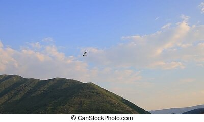 Seagull flying in the sky. Montenegro, Adriatic