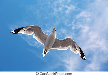 Seagull flying in the sky
