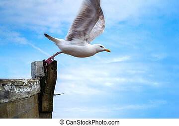 Seagull flying off from the front of the boat