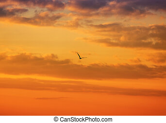 Seagull flying on a sunset background