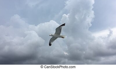 Seagull flying on blue sky background. Shot of a seagull...