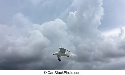 Seagull flying on blue sky background.