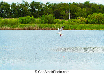 Seagull flying over a lake