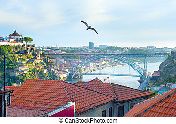 Seagull flying over Porto, Portugal