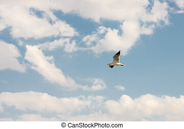 Seagull flying over the beautiful water surface