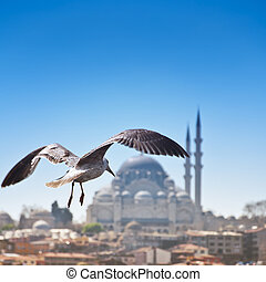 Istanbul - Seagull flying over the Bosporus, Istanbul